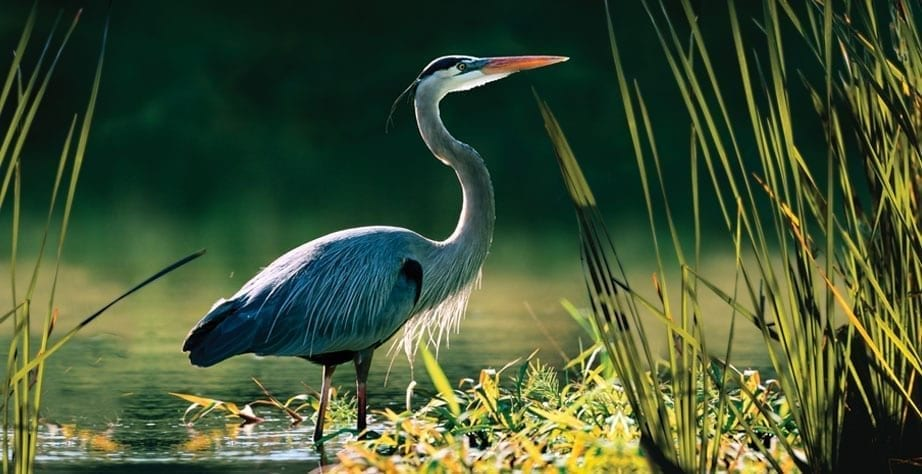 bird in neal landFlorida developers